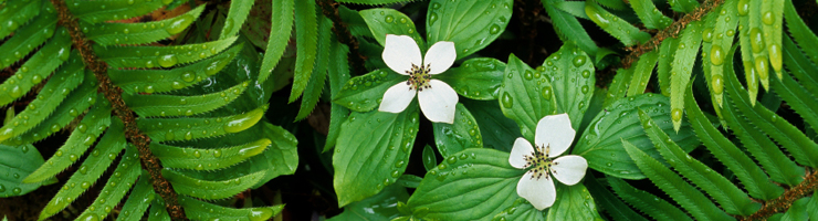 White flowers against green background
